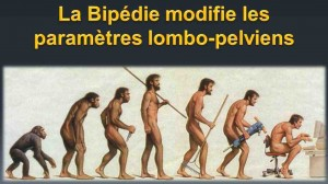 Evolution assise?